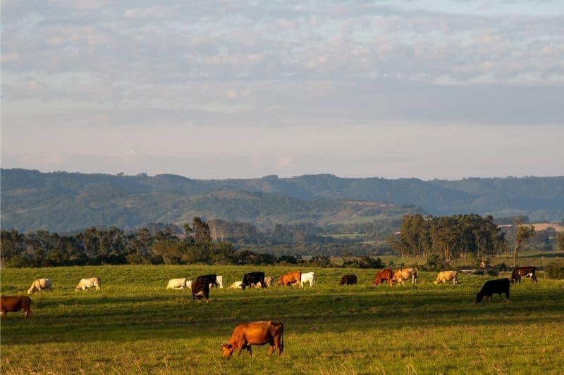 animales ganadería extensiva